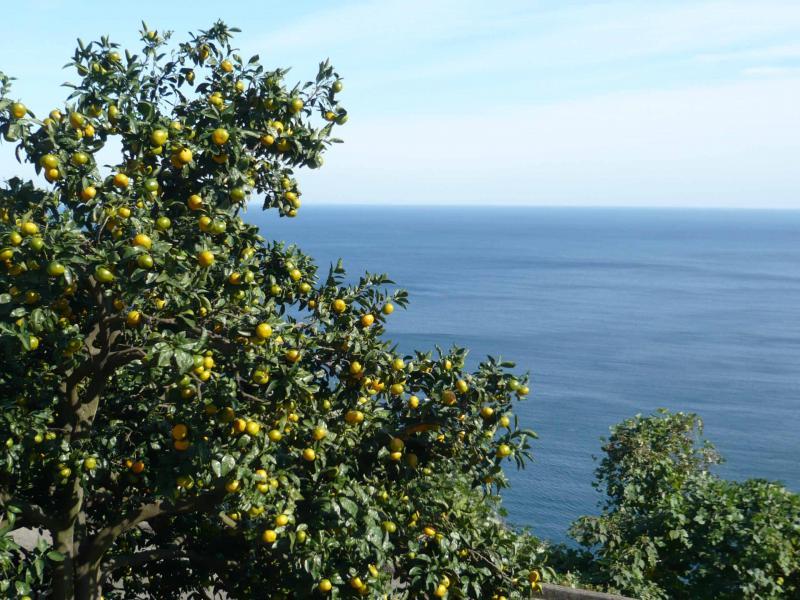 青い海とみかん。のどかな光景が美味しいみかんを育みます。