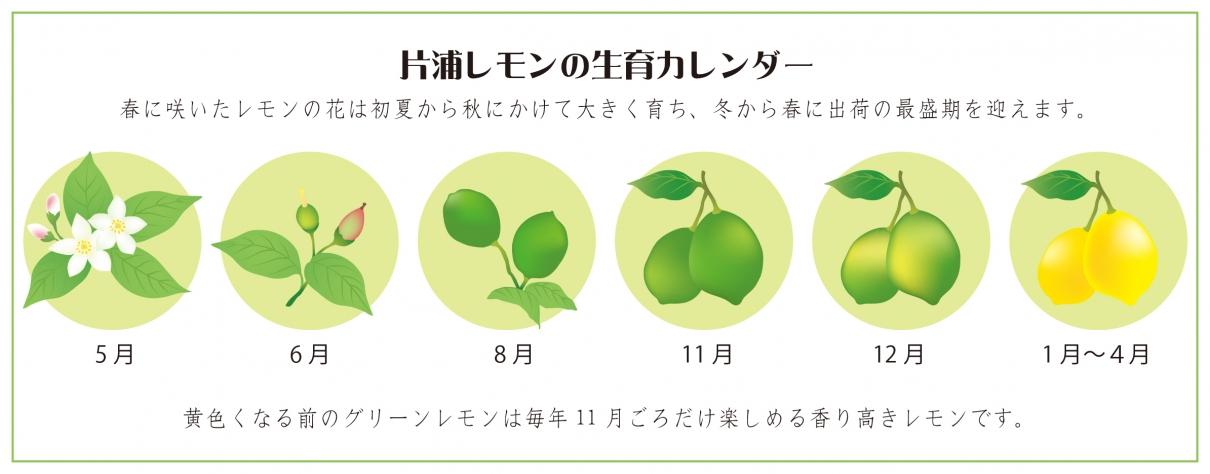 片浦レモンの生育カレンダー