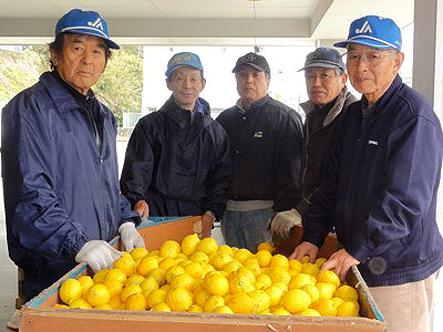 JAあしがら西湘 片浦レモン部会