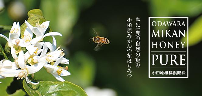 年に一度の自然の恵み「小田原みかんの花はちみつ」